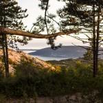 Forest Orien_3